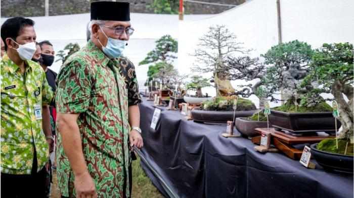 Ketika Bonsai dari Berbagai Daerah Diadu di Kontes Bonsai Banjarnegara