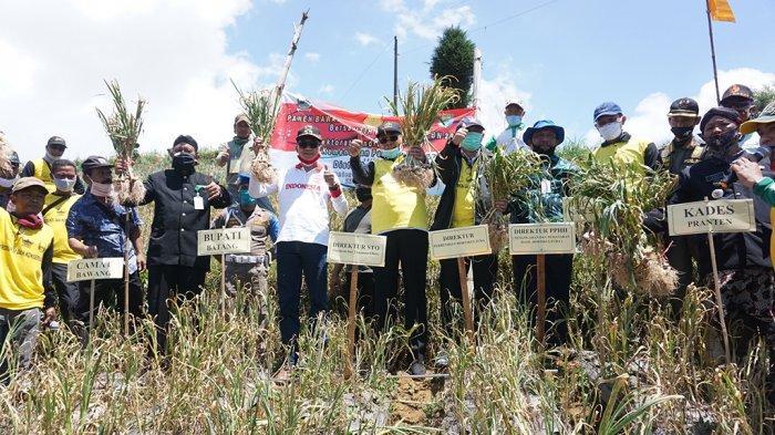 Pemkab Batang Genjot Pengembangan Tanaman Bawang Putih