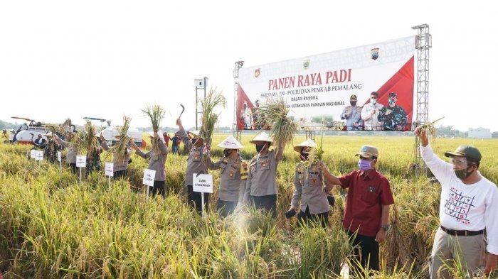 Polda Jateng dan Kodam IV/Diponegoro Panen Raya 220 Hektare di Pemalang