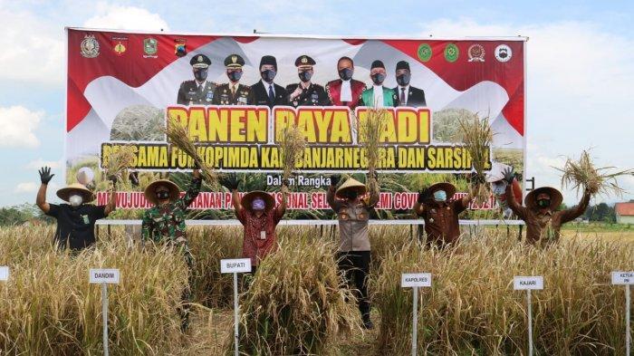 2,5 Bulan Bisa Panen, Petani Pucang Banjarnegara Nikmati Panen Raya