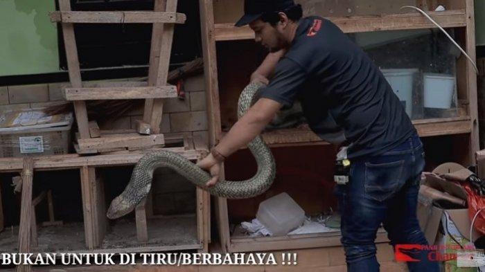Punya Ikatan Khusus dengan King Cobra Garaga, Panji Petualang: Kalau Digigit Tetap Panas Dingin