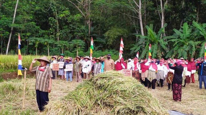 Ketika Petani di Banyumas Merayakan Kemerdekaan, Gelar Upacara 17 Agustus di Tengah Sawah