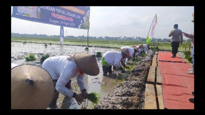 Lakukan Tanam Perdana di Sidoharjo Sragen, Pupuk Indonesia Sosialisasi Pupuk Cair