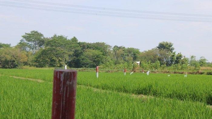 Proyek Tol Solo - Jogja  Sepanjang 36 Km, 50 Desa di Klaten Bakal Terdampak
