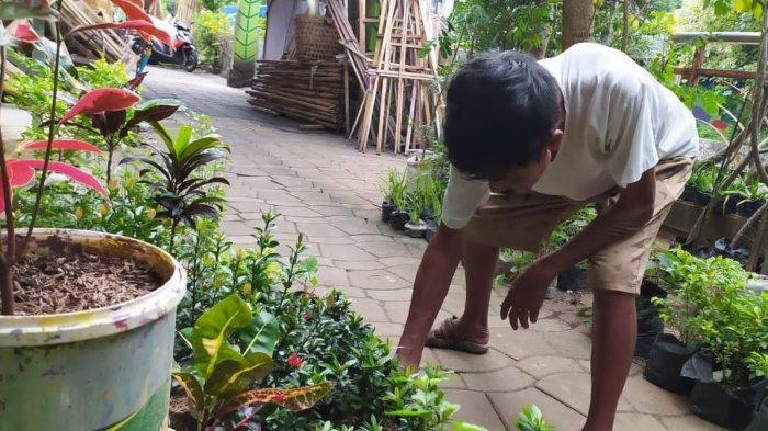 Kian Ramai di Kala Pandemi, Pebisnis Tanaman Hias di Semarang Bisa Raup Omzet Puluhan Juta