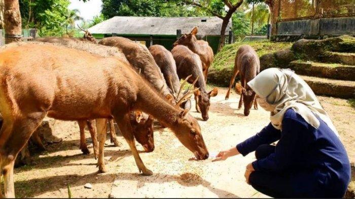 Kunjungan ke Bonbin Serulingmas Turun di Masa PPKM, Pengelola Galang Donasi untuk Pakan Satwa