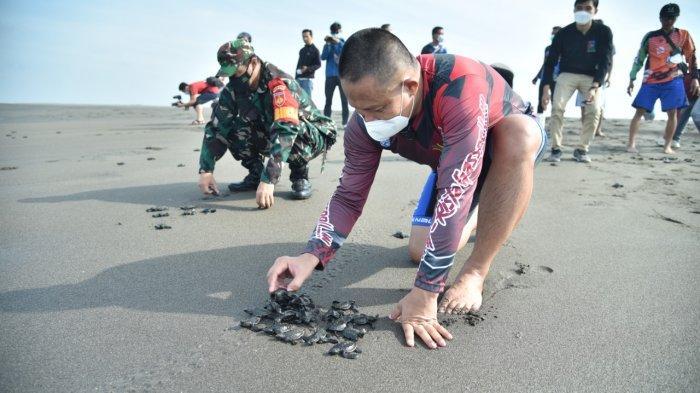 Warga Jogosimo Kebumen Budayakan Lepas Penyu ke Laut Selatan