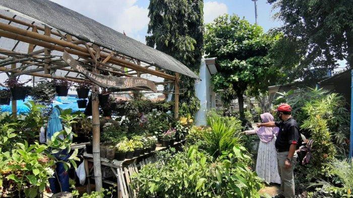 Penjualan Tanaman Hias di Tegal Meroket di Masa Pandemi Covid-19