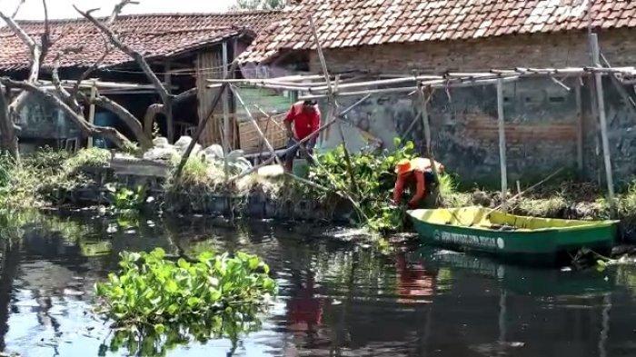 BPBD Pekalongan Bersihkan Enceng Gondok di Sungai