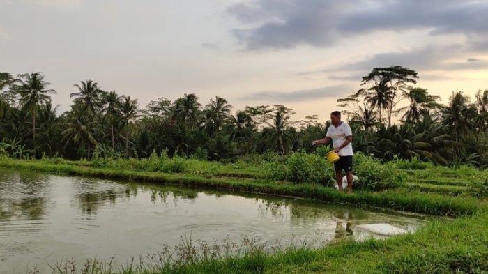 Geliat Usaha Pembenihan Ikan di Desa Gumiwang Banjarnegara, Tetap Eksis di Tengah Pandemi