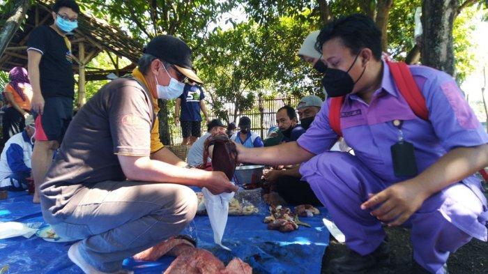 Ditemukan Cacing Hati pada 6 Ekor Sapi Kurban di Kendal, Dinas Pangan: Dikubur Saja