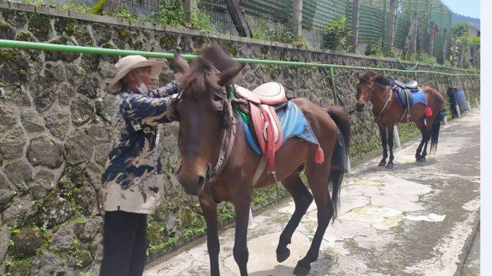 Pemilik Kuda Tunggangan di Grojogan Sewu Tawangmangu Tetap Bertahan di Tengah Pandemi