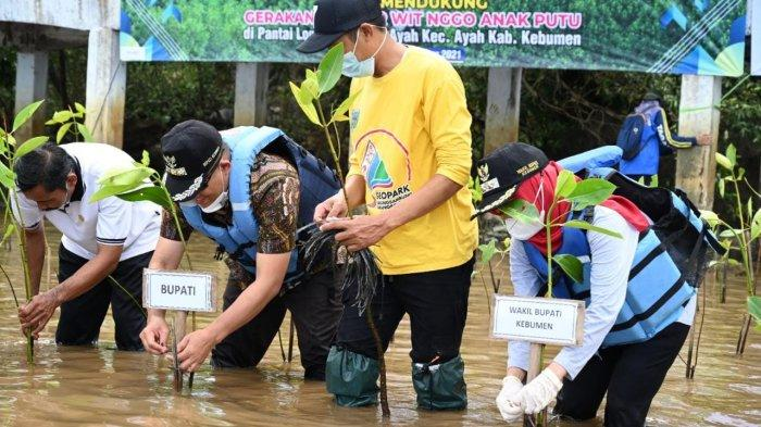 Bisa Menahan Laju Tsunami, 50 Ribu Mangrove Ditanam di Pesisir Kebumen