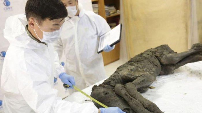 Ambisi Para Ilmuwan 'Bangkitkan' Kuda Purba dari Zaman Es
