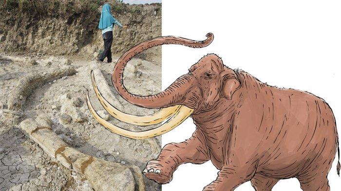 GEGER Penemuan Fosil Gajah Stegodon Sebesar Rumah di Grobogan segera Mendunia