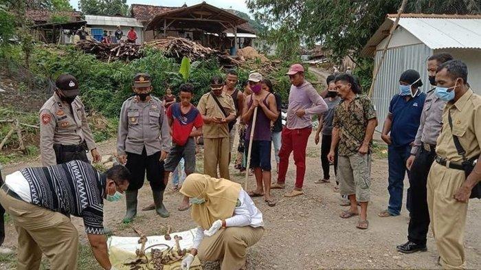 BREAKING NEWS: Penemuan Kerangka Manusia di Hutan Jepara Saat Warga Cari Tanaman Porang