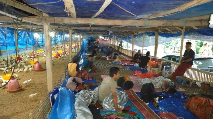 Puluhan Warga Majene Memilih Tidur Bareng Ayam dalam Kandang: Tubuh Mereka Gatal-gatal
