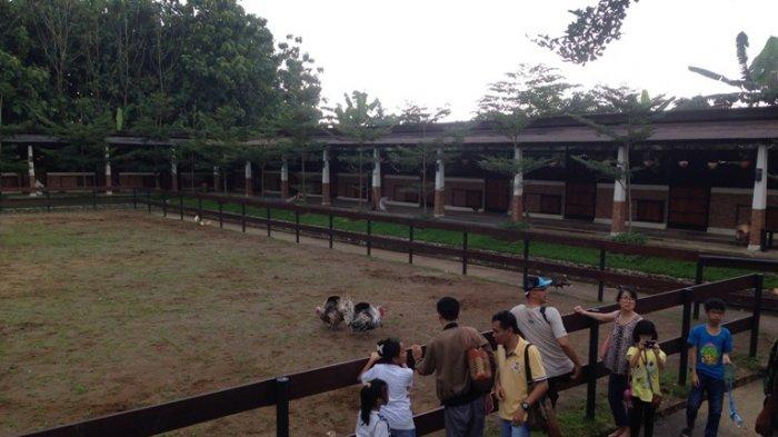Ingin Berkuda Sembari Menikmati Indahnya Alam Gunung Ungaran? Kunjungi Tempat Ini