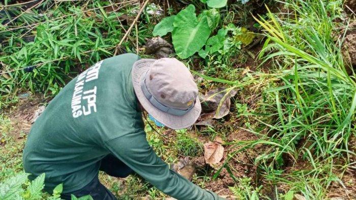Edy Rutin Gelar Gropyokan untuk Basmi Tikus yang Menyerang Sawah di Kecamatan Randudongkal