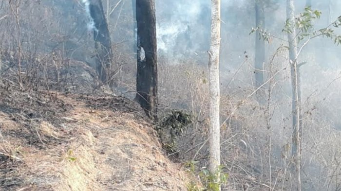 Perkebunan Warga dan Sebagian Hutan Pinus Perhutani Purwanegara Terbakar