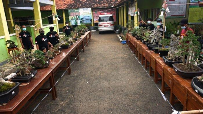 Kenalkan Bonsai ke Masyarakat, PPBI di Batang Menggelar Jemur Bonsai
