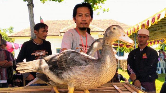 Peternak Unggas Kabupaten Kendal Waspadai Dua Penyakit Ini, Rawan Saat Musim Hujan