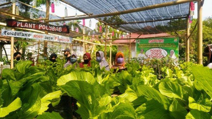 Manfaat Makin Dirasakan, KUR Pertanian Sudah Tersalur Rp 28 Triliun