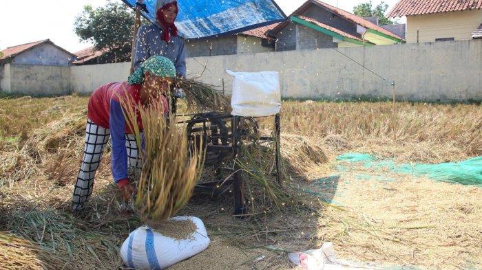 KUR Pertanian Jadi Angin Segar Bantu Perekonomian Petani di Masa Pandemi