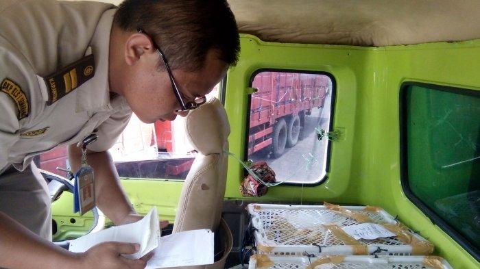 Petugas Balai Karantina Pertanian Cek Komoditi Truk di Pelabuhan Kendal