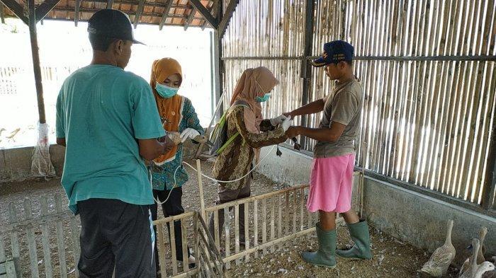 Jalur Pantura Brebes Dinilai Rawan Penyebaran Flu Burung