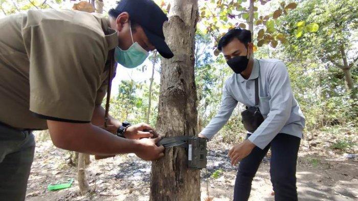 Deteksi Keberadaan Macan Tutul, Kementerian LHK Pasang Camera Trap di Hutan Rembang