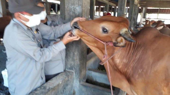 Sebelum Penyembelihan Hewan Kurban, Seluruh Petugas RPH Penggaron Semarang Akan Tes Antigen Besok