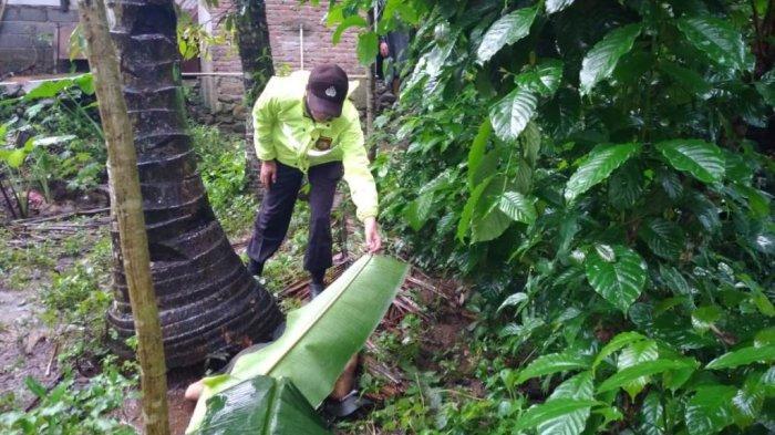 Seorang Penderes Nira di Banyumas Tewas Jatuh dari Pohon Kelapa Setinggi 10 Meter