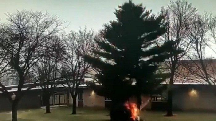 Viral Detik-detik Pohon Besar Depan Sekolah Hangus Terbakar Disambar Petir