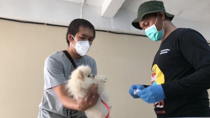 Tingkah Lucu Hewan Peliharaan Warnai Vaksinasi Rabies di Balai Karantina Pertanian Kelas I Semarang