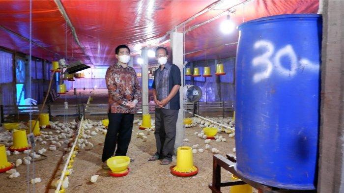 PLN Dukung Industri Peternakan Ayam