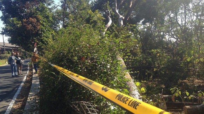 Penyebab Pemadaman Listrik, Pohon Sengon Lokasi Ledakan di Gunungpati Masih Dipasangi Garis Polisi