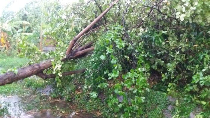 Seorang Pria Asal Geran Wonogiri Tewas seusai Tertimpa Pohon Kelapa
