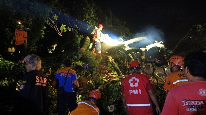 BREAKING NEWS: Pohon Tumbang Timpa Truk di Jalan Pantura Pekalongan