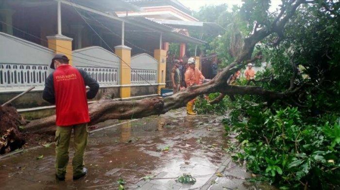 Belasan Pohon di Semarang Tumbang Akibat Hujan Deras dan Angin Kencang : Banjir Siaga 1