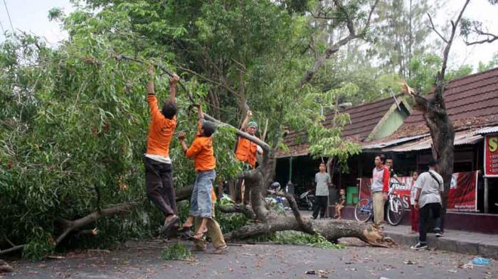 Tertimpa Pohon Tumbang saat Pulang Kuliah, Seorang Mahasiswa di Banjarnegara Dilarikan ke RS