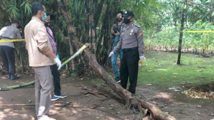 Parsiman Warga Brecong Kebumen Meninggal Tertimpa Pohon Pundung