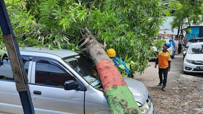 BREAKING NEWS : Pohon Lapuk di Jalan Karangayu Semarang Tumbang Timpa Mobil Panther