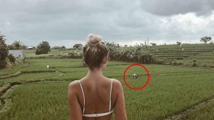 Dinilai Hina Petani Bali, Wisatawan Perempuan Asal Swedia Ini Diserang Netizen Indonesia