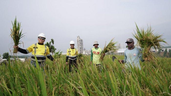 PT Semen Gresik (SG) tingkatkan kesejahteraan para petani dengan menginisiasi berbagai kegiatan pemberdayaan masyarakat. Melalui program SG Sahabat Petani, perusahaan menggelar Panen Raya jagung, padi gogo, dan jambu kristal di lahan Izin Pinjam Pakai Kawasan Hutan (IPPKH) milik Semen Indonesia Persero (Tbk) yang berada di area operasional PT Semen Gresik Pabrik Rembang. (25 Maret 2021)
