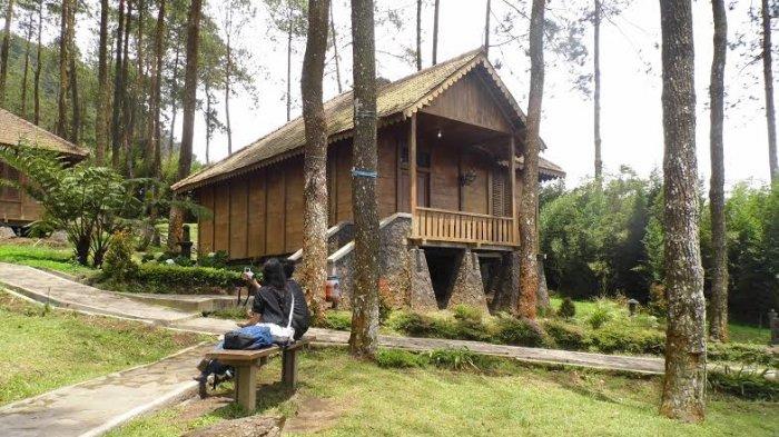Rumah Kayu di Antara Pohon Pinus Ini Jadi Alternatif Tempat Istirahat Usai Keliling Gedong Songo