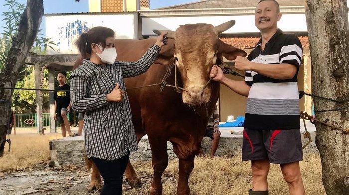 Boy Limos Sapi Limousin Terberat di Pati Terjual Seharga Rp 100 Juta