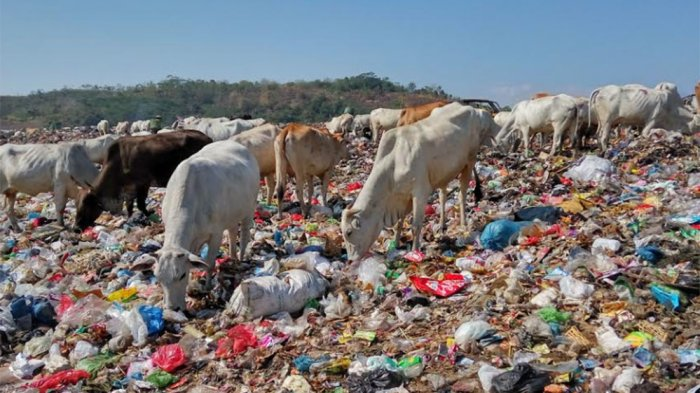 Produksi Sampah Kota Semarang 1.200 Ton per Hari, 46 Hektar TPA Jatibarang Bakal Penuh