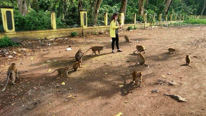 Wisata ke Candi Batur Pemalang, Jangan Lupa Berinteraksi dengan Kawanan Monyet Ekor Panjang