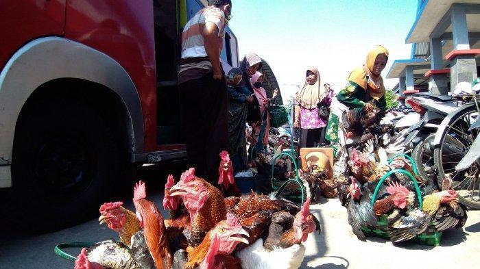 Jelang Lebaran, Harga Daging Ayam Kampung di Kudus Naik Rp 20 Ribu Per Ekor